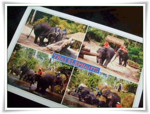 Thail. Elefanten
